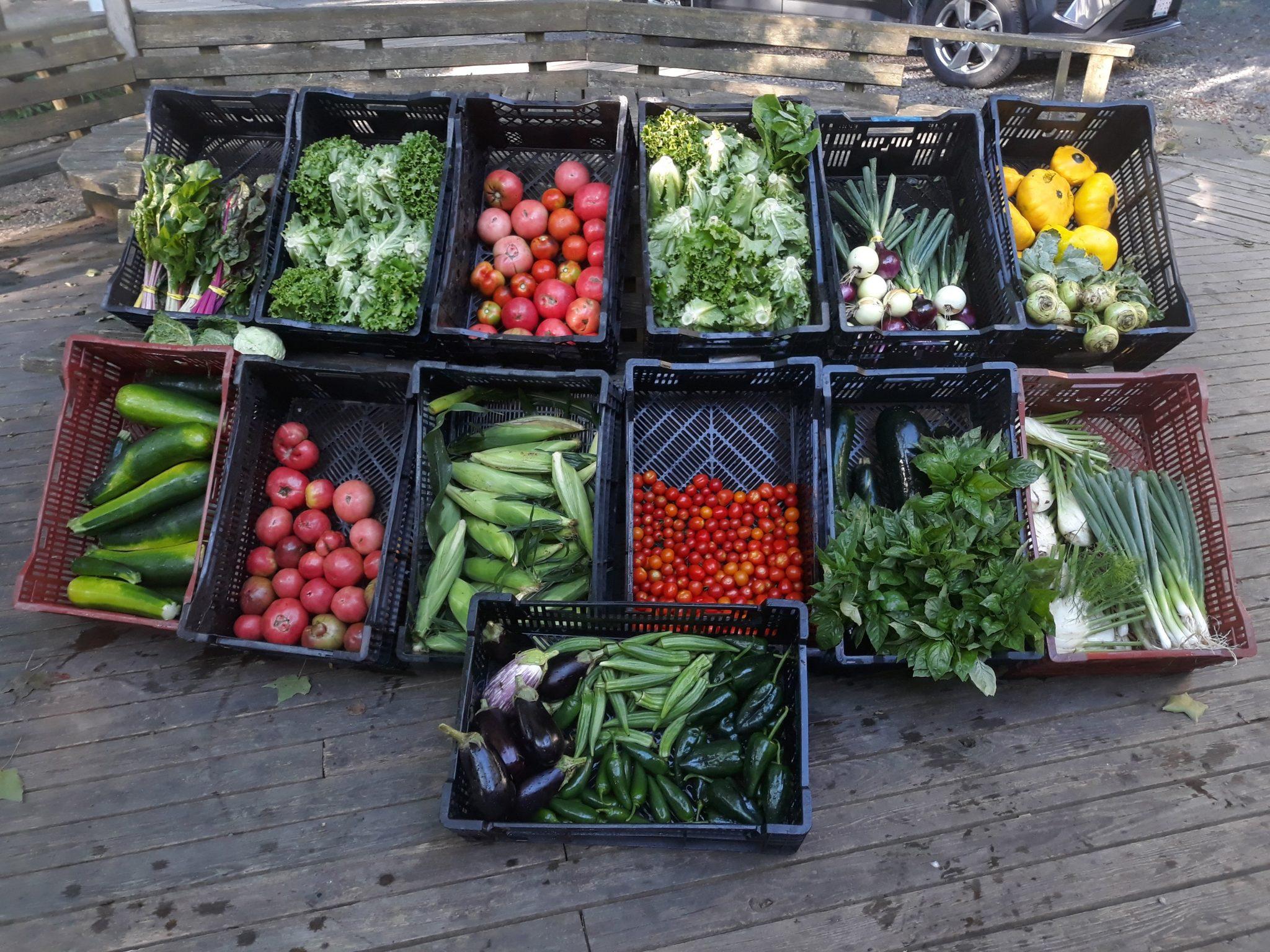 Lots of Garden Vegtables in Bins